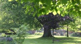 Bäume im Abteigarten, Foto: C. Faber