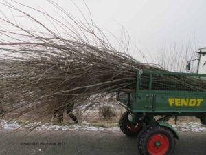 Die Weiden werden zurückgebracht, Foto: Stift Fischbeck