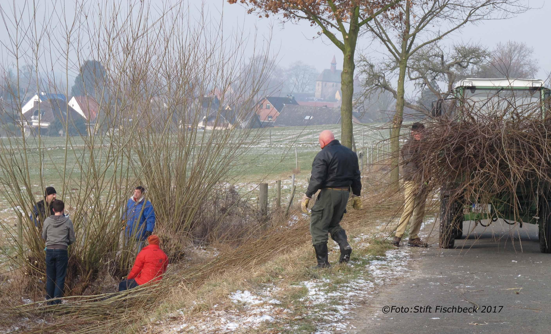 Weidenschnitt,Foto:Stift Fischbeck